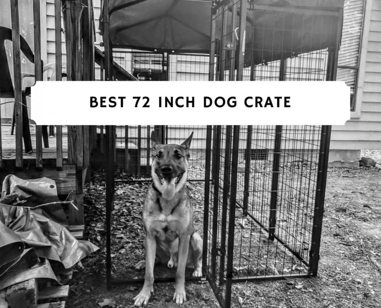 Best 72 inch dog crate