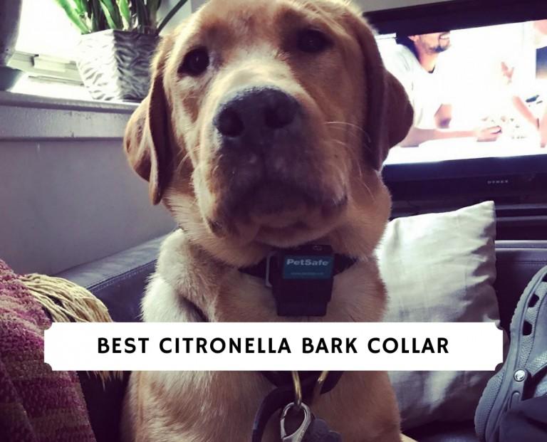 Best Citronella Bark Collar