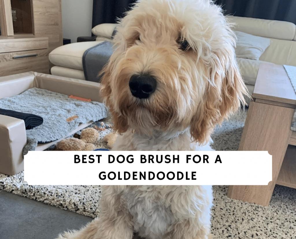 Best Dog Brush for a Goldendoodle