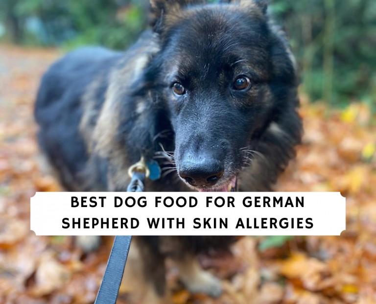 Best Dog Food For German Shepherd with Skin Allergies