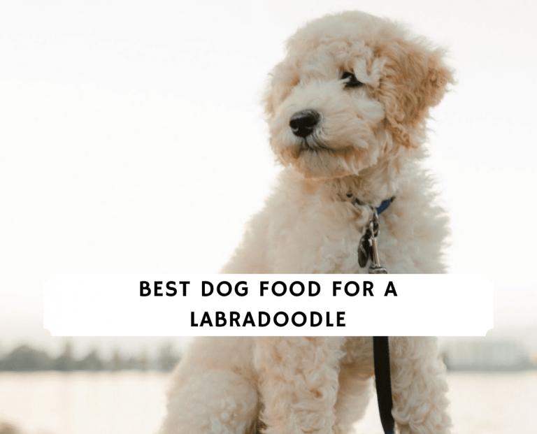 Best Dog Food for a Labradoodle