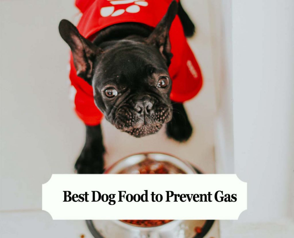 Best Dog Food to Prevent Gas