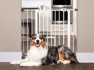 Dog Gate for Jumpers