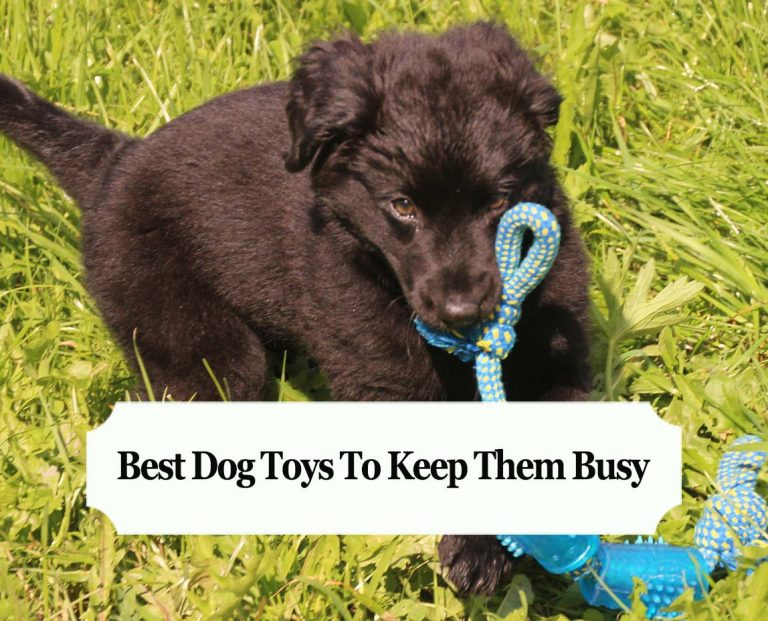 Best Dog Toys To Keep Them Busy