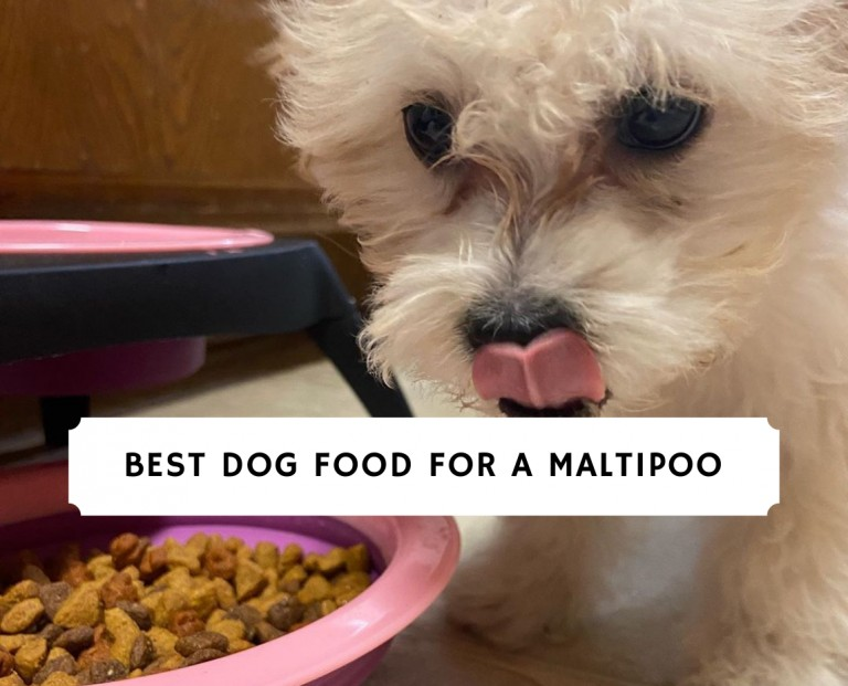 Best Dog food for a Maltipoo