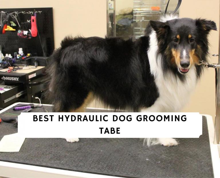 Best Hydraulic Dog Grooming Tabe