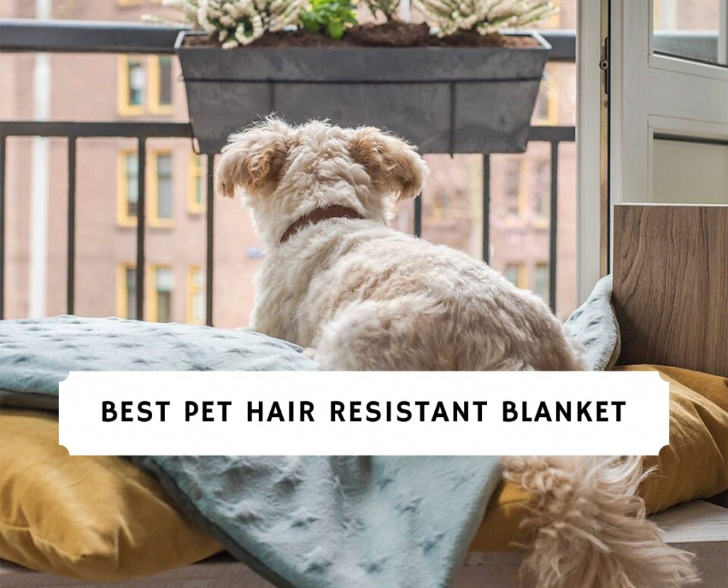 Best Pet Hair Resistant Blanket