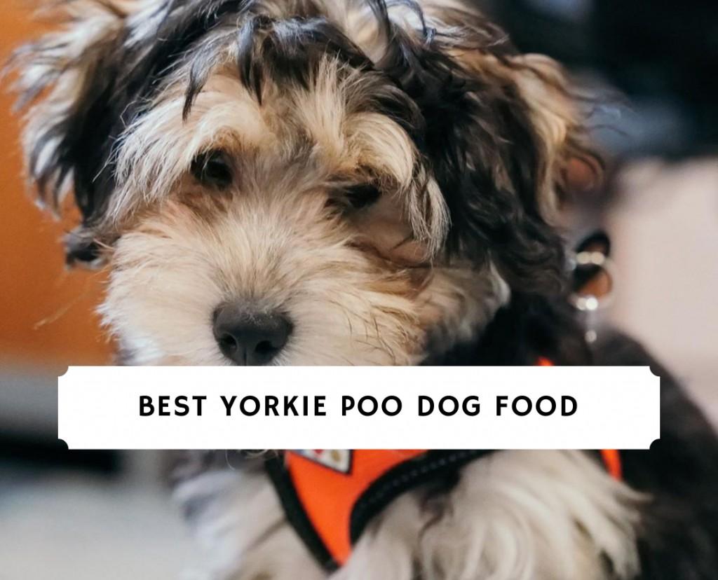 Best Yorkie Poo Dog Food