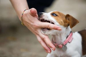Can aggressiveness be fixed in dogs with a shock collar