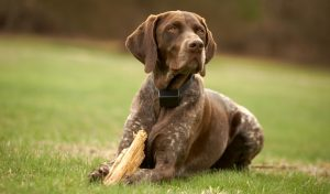 Can shock collars cause aggression