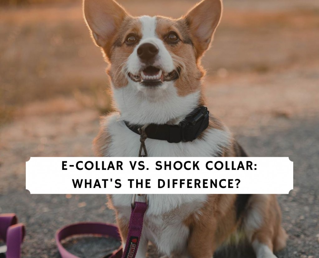 E-Collar vs. Shock Collar_ What's the Difference_