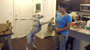 How to Get Your Dog to Stop Jumping on the Door when Visitors Arrive