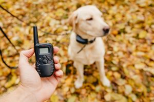 How to Use an E-Collar to Train Your Dog