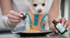 Tips for Feeding Your Dog Hemp