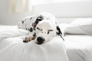 Ways to Use a Pet Hair Resistant Blanket