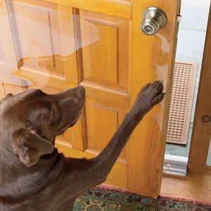 Why does my dog scratch the door
