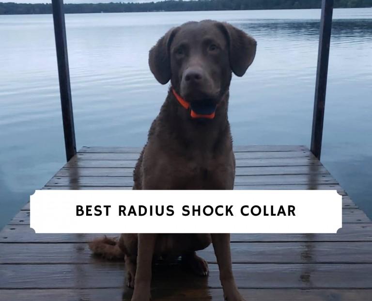 best Radius Shock Collar