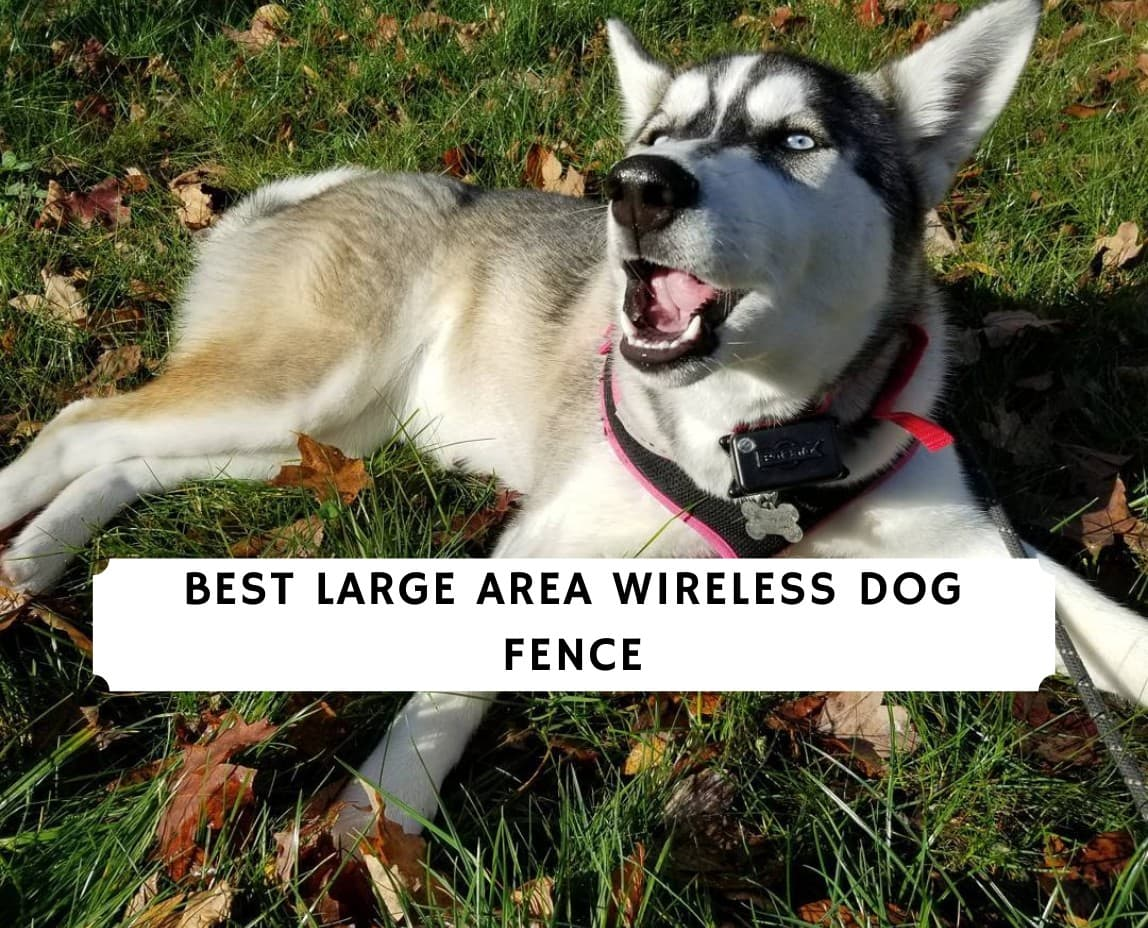 best large area wireless dog fence