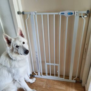 gates for dogs that jump