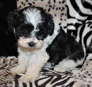 Puppy Love 4 U