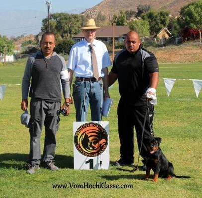 Vom HochKlasse Rottweilers California