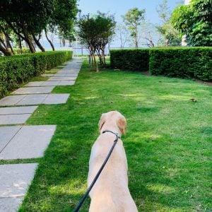 1 acre dog fence