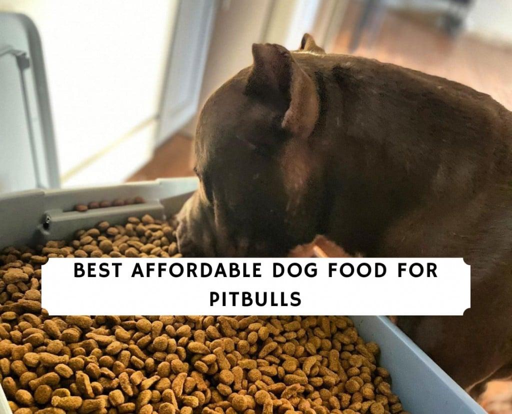Best Affordable Dog Food for Pitbulls