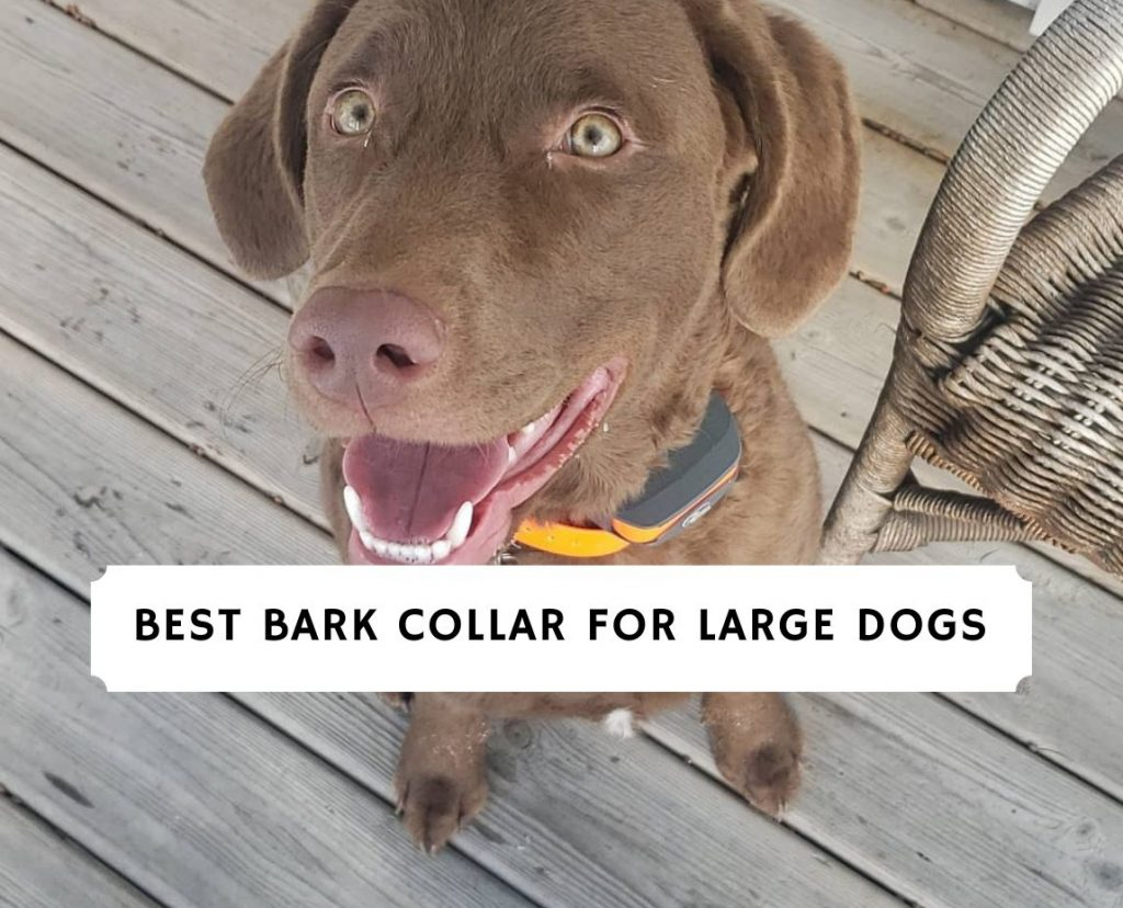 Best Bark Collar for Large Dogs