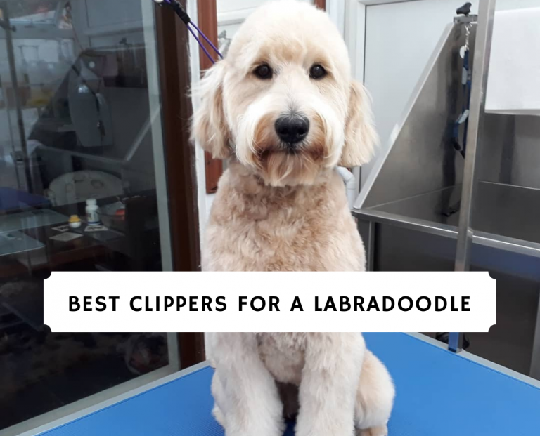 Best Clippers for a Labradoodle