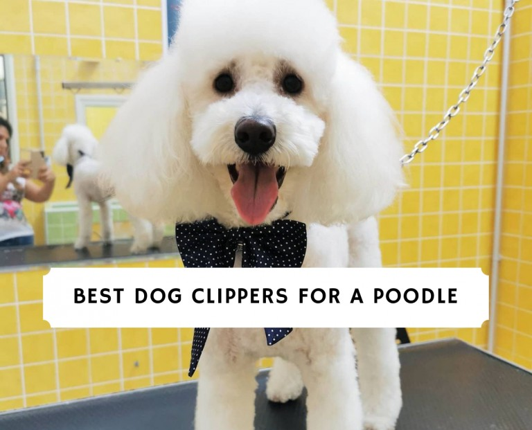 Best Dog Clippers for a Poodle