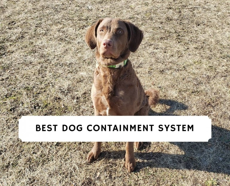 Best Dog Containment System