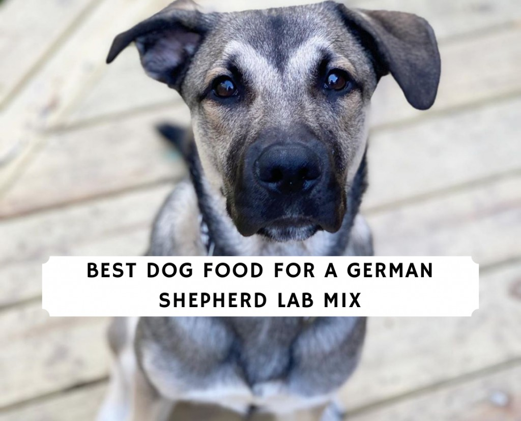 Best Dog Food for a German Shepherd Lab Mix