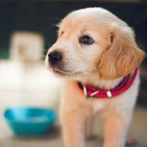 Vitamins and minerals dog food
