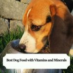 Best Dog Food with Vitamins and Minerals