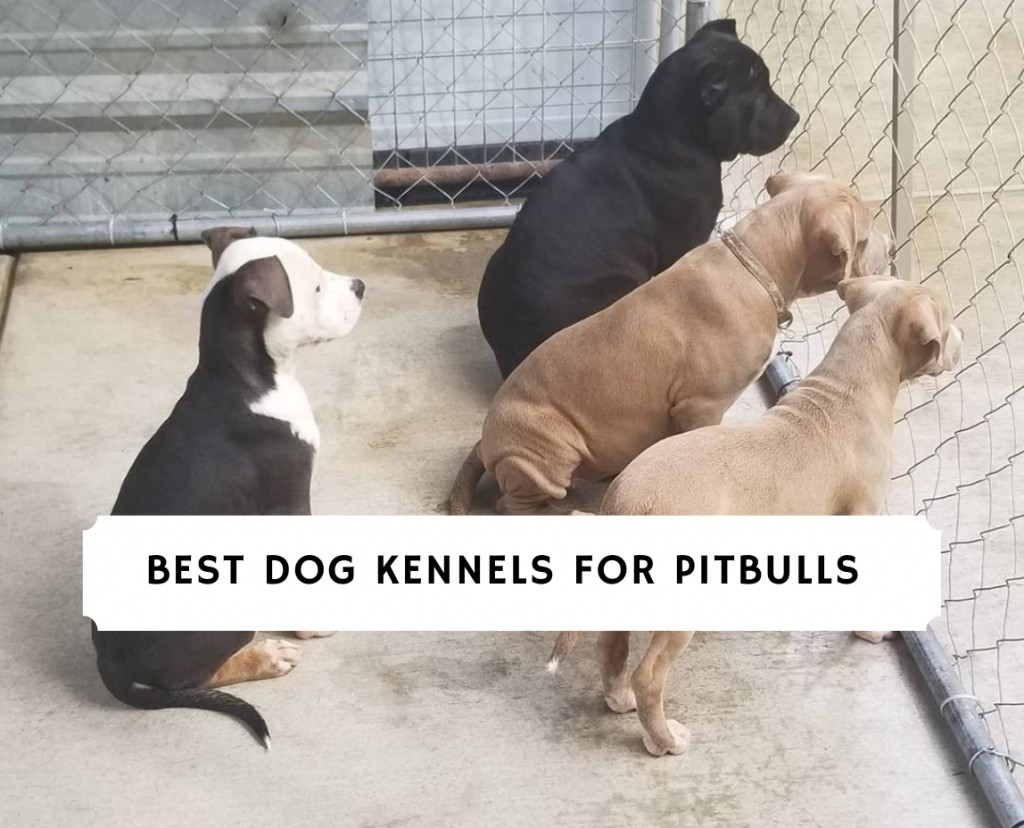 Best Dog Kennels for Pitbulls