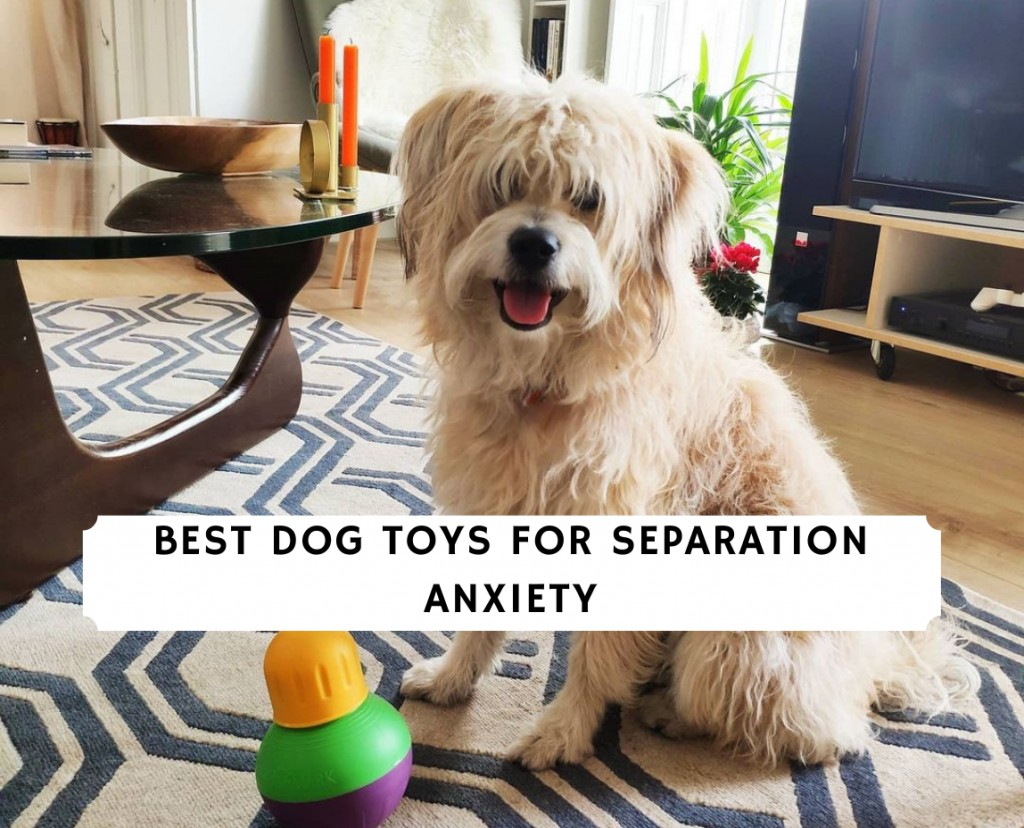 Best Dog Toys for Separation Anxiety