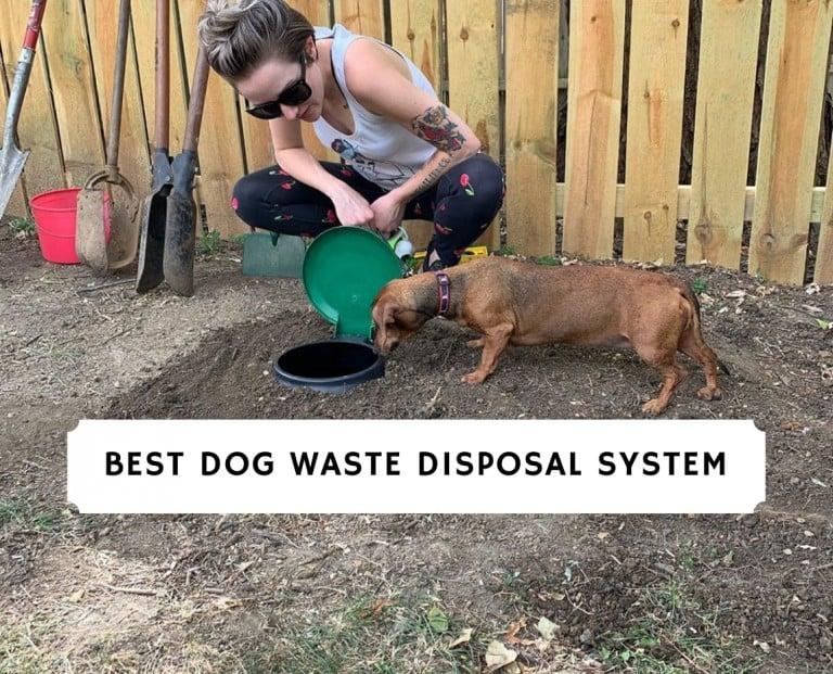 Best Dog Waste Disposal System