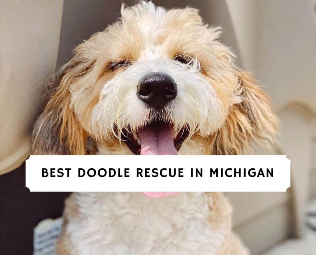 Best Doodle Rescue in Michigan