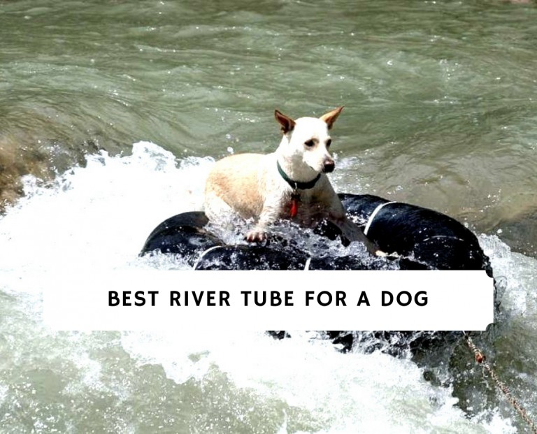 Best River Tube For a Dog