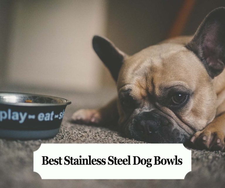 Best Stainless Steel Dog Bowls