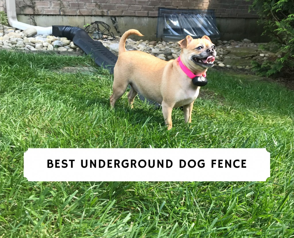 Best Underground Dog Fence