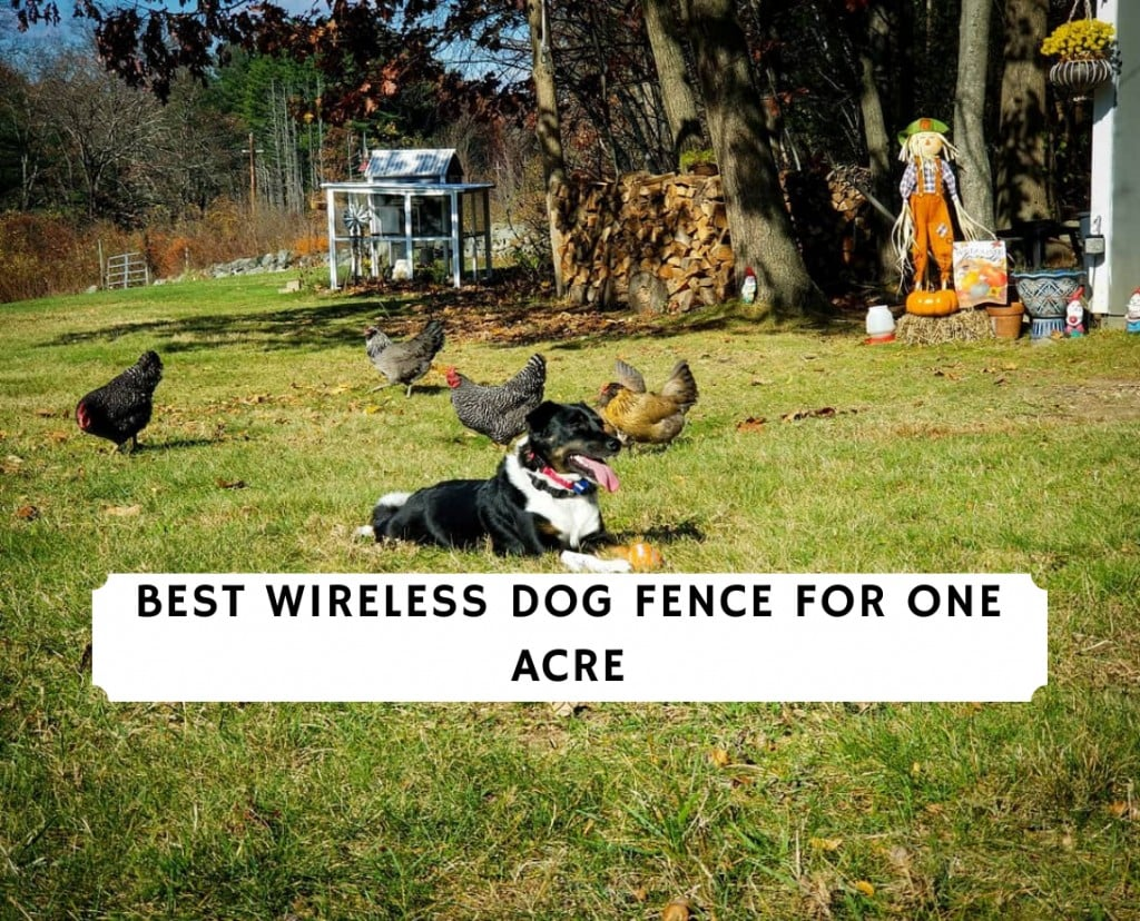 Best wireless dog fence for 1 acre