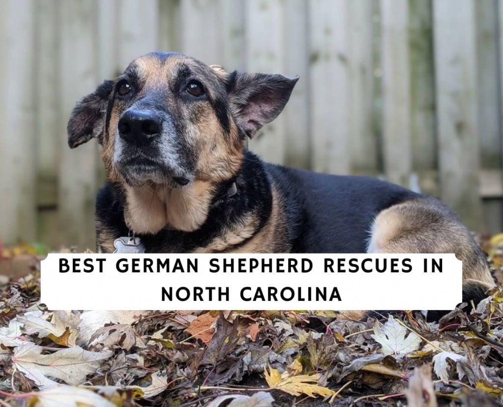 German Shepherd Rescues In North Carolina