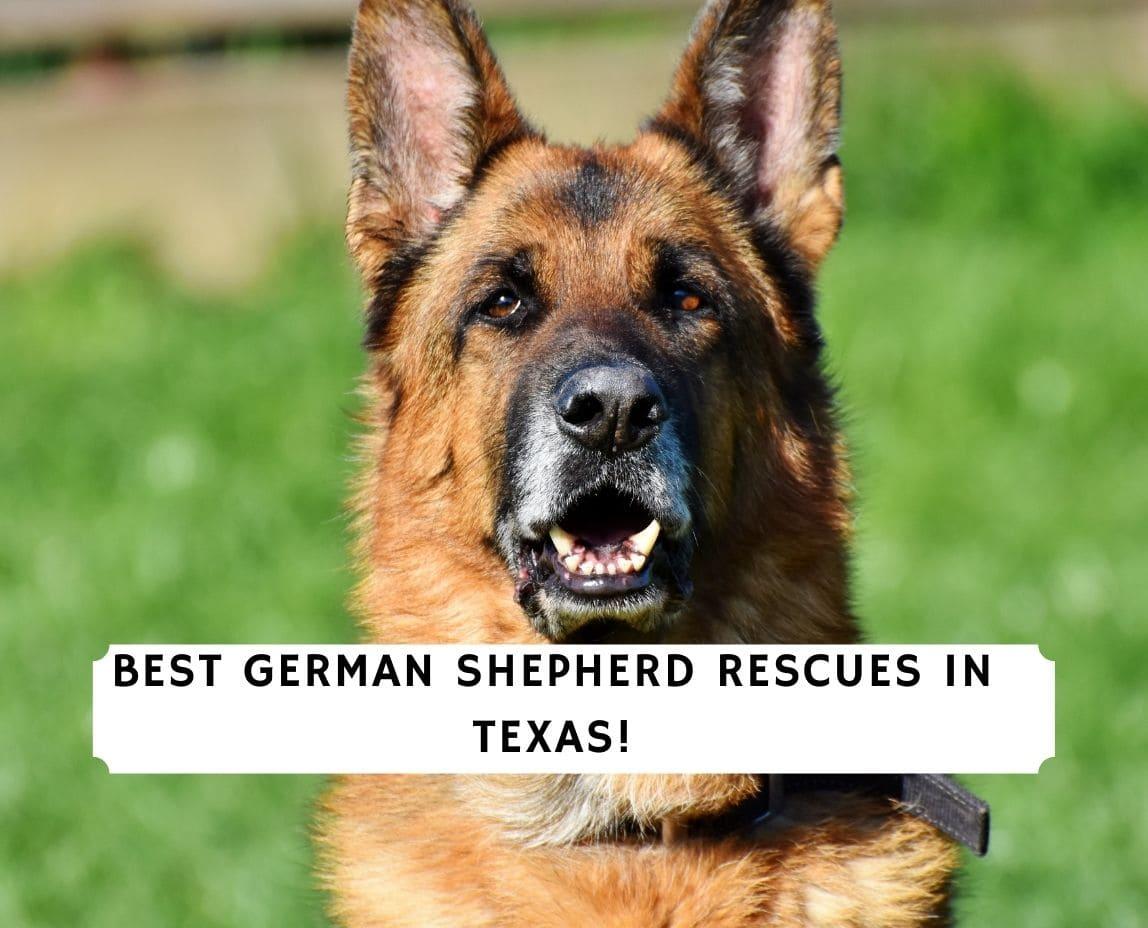 German Shepherd Rescues in Texas