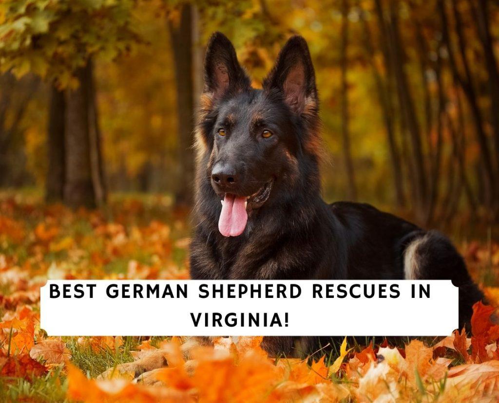 German Shepherd Rescues in Virginia