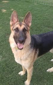 Good Shepherd Rescue of Texas