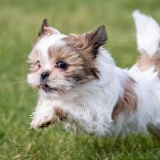 Prettiest Puppies Texas