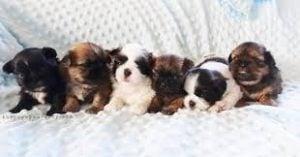 The Puppy Nursery