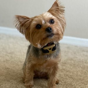bark control collar for small dogs