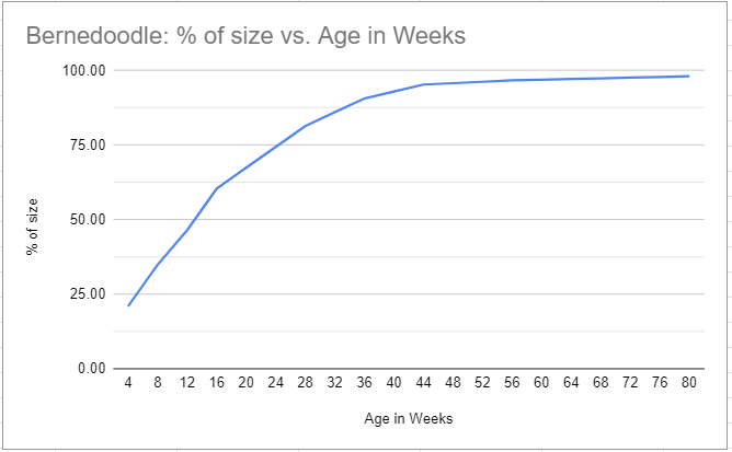bernedoodle size vs. age in weeks